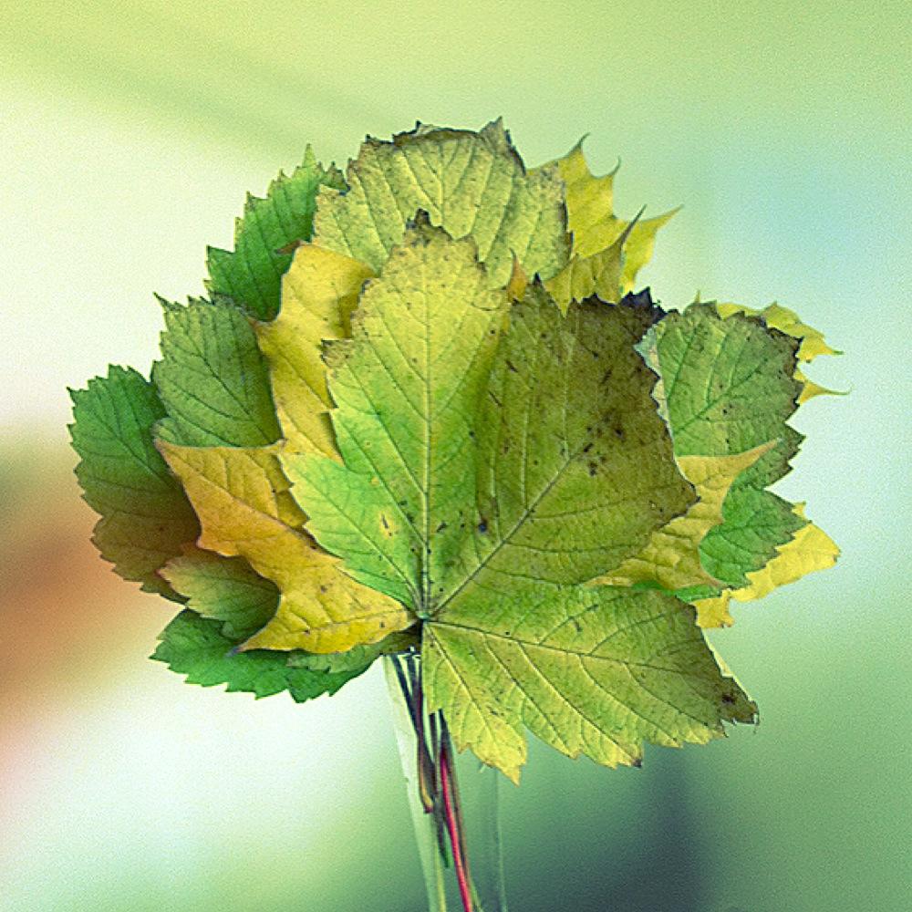 klimatsmart grönt löv