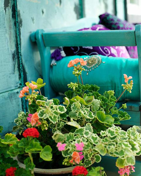 Begonia i ett dödsbo