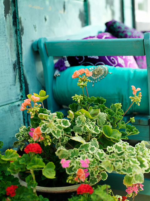 Begonia i homestylat hem