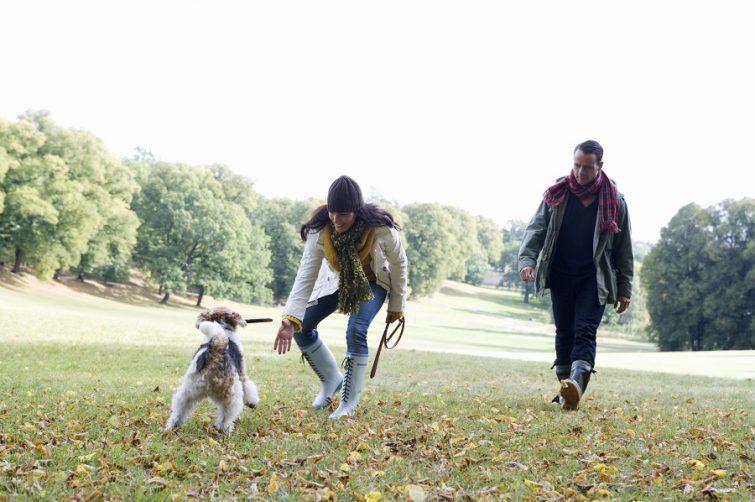 Flytta med hund, kvinna och man leker med flyttad hund.