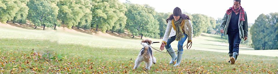 Flytta med hund till ny omgivning