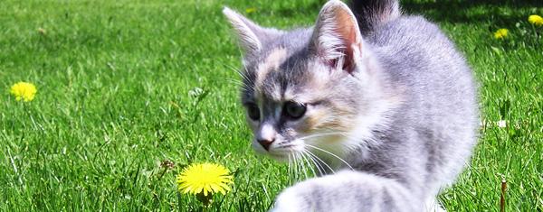 Katt som flyttat till nytt område tittar på blomma