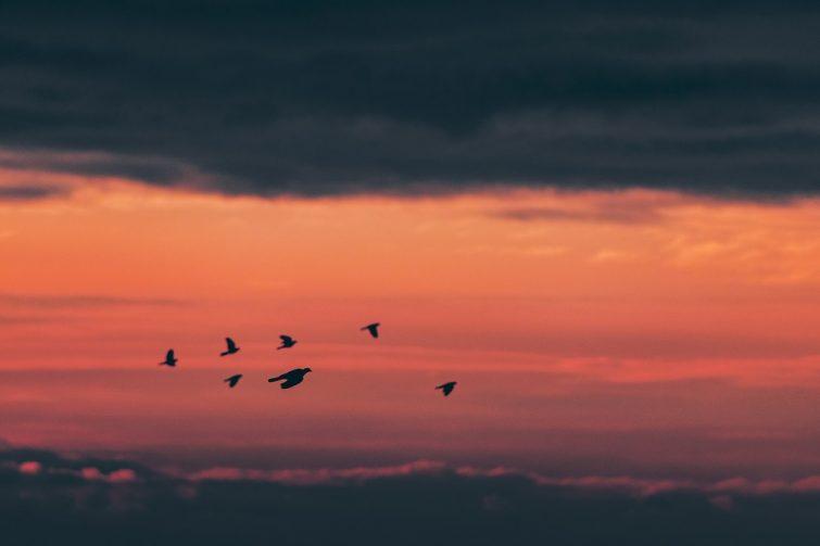 Fåglar som flyttar till Borås